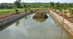 creation fish pond